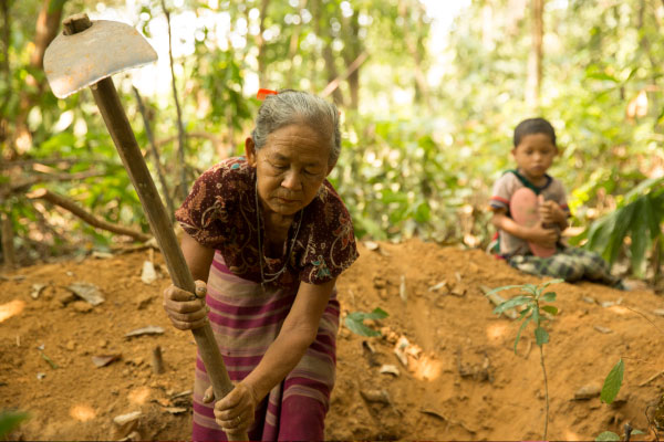 Nge digs for ka-tat tree roots, which she will cook in a stew for her and her grandchildren.